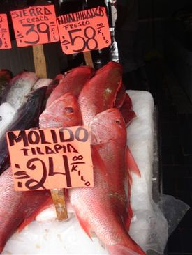Zapopan_fish_market_really_big_red_snapp